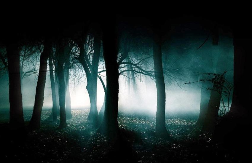 ombra nella foresta