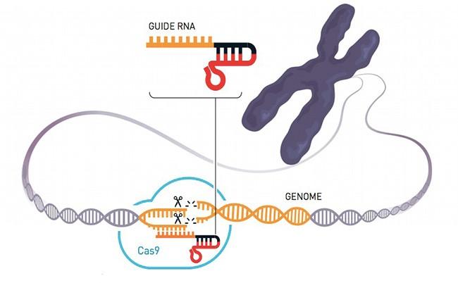 editing del genoma premio nobel per la chimica